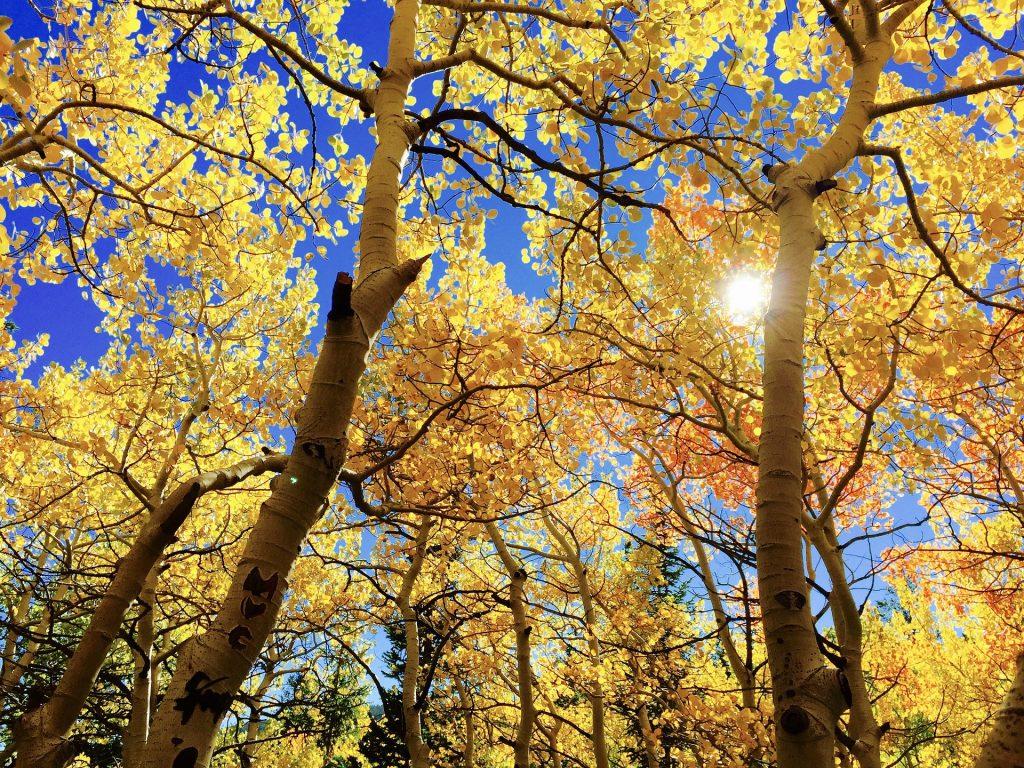 Human Givens Tree